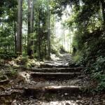 Tour Koyasan e Kumano Kodo con Estensione da Kyoto