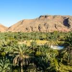 Tour Fascino del Deserto